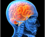 brainorangethumb